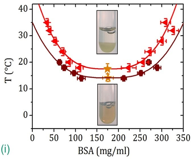(i) LLPS heating BSA-YCl_3 samples above the lower critical temperature (gold star). Copyright: University of Tübingen