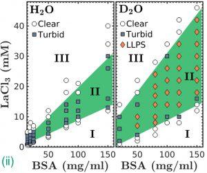 (ii) Appearance of a LLPS region in BSA-LaCl3 samples in D2O vs. H2O. Copyright: University of Tübingen