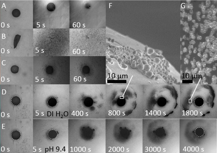 Optical images of dissolution of capsules with compositions highlighted in the figure showing (A-C) instantaneous, (D-E) sustained, pulsed and diffuse release. (F) High magnification images of the surface cracks of the capsule and (G) the emanating micron-sized nanoparticle clusters. (H) The droplet radius of the composite (D) capsule was found to remain approximately constant over time, and release of micron-sized nanoparticle clusters occurs in bursts, over long timescales, tuneable with pH. Copyright: Authors, taken without changes from 10.1126/sciadv.aao3353 which has been published under Creative Commons Licence CC BY 4.0 (https://creativecommons.org/licenses/by/4.0).