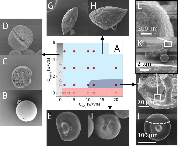 Phase map and accompanying SEM images of shape and internal structure of polymer-silica composite capsules, as a function of NaPSS and SiO2. Spherical polymer capsules with increasing size and smaller pore dimensions are obtained with increasing NaPSS concentration, shown in grey region. Compact and dimpled capsules are obtained in the absence of polymer, with increasing size with silica content, shown in the pink region. At most NaPSS/ SiO2 compositions, non-spherical capsules with folded geometries are found, shown in light blue region. Within a narrow composition range, indicated in dark blue, dimpled capsules with a bicontinuous internal structure are obtained, comprising hierarchical silica microparticles, and a composite polymer-nanoparticle shell and scaffold. Copyright: Authors